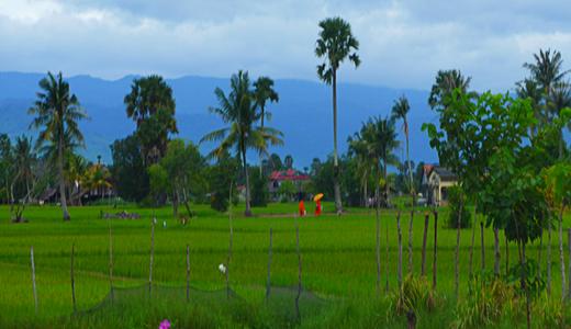 paysage (2)